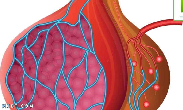 علاج التهاب الخصية بالأعشاب  أقوى 8 أعشاب طبيعية لإلتهاب الخصية