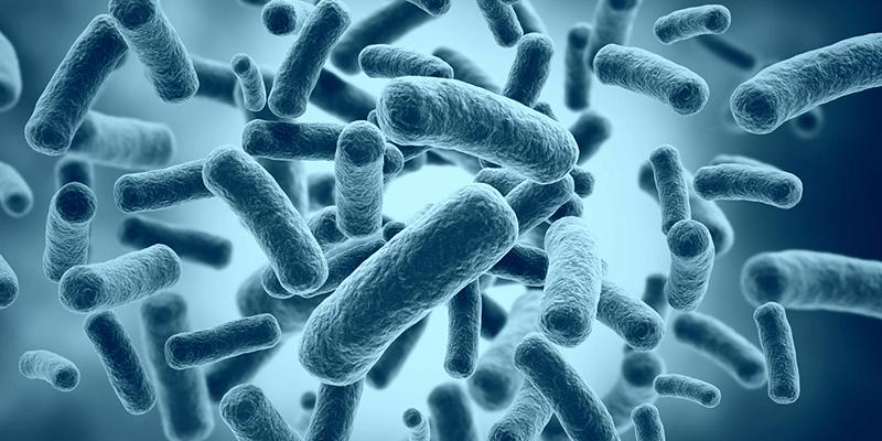 الامراض التي تسببها البكتريا
