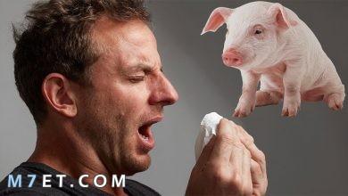 Photo of الوقاية من انفلونزا الخنزير