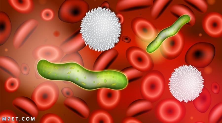 أعراض الالتهاب الفيروسي في الدم