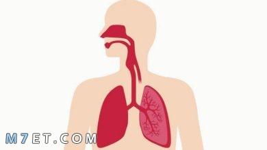 Photo of أعراض التهاب القصبات التحسسي | 20 دواء لالتهاب القصبات التحسسي