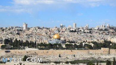 Photo of أكبر مدينة فلسطينية من حيث عدد السكان