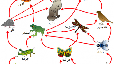 Photo of أهم المعلومات عن السلسلة الغذائية للحيوانات