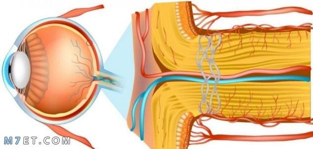 العصب البصري
