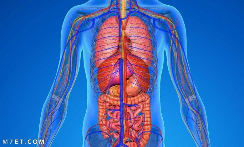 العناصر الكيميائية في جسم الإنسان