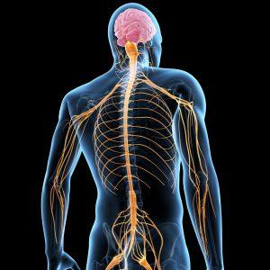الفرق بين الجهاز السمبثاوي والبار سمبثاوي