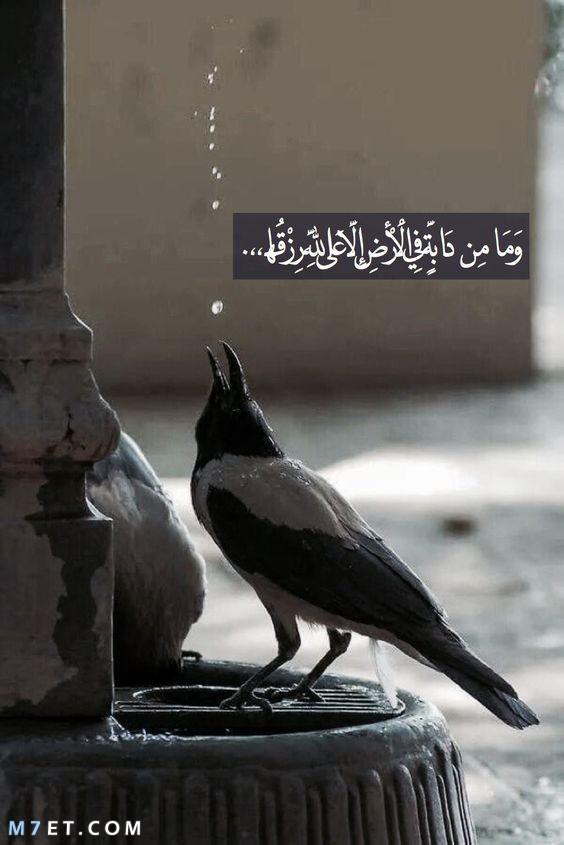 حديث الرسول مع أصحابه عن الرزق