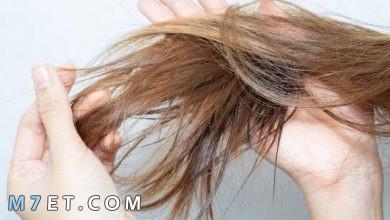 Photo of وصفات طبيعية لتطويل الشعر في اسبوع