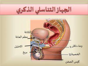 الجهاز التناسلي للرجل   أشهر 6 أمراض الجهاز التناسلي للرجال