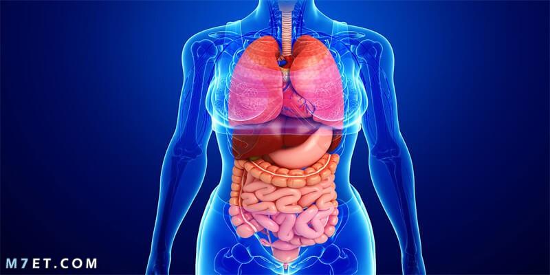 الأجهزة الداخلية لجسم الإنسان