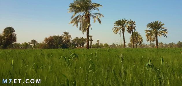 صعيد مصر