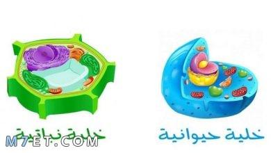 Photo of ما الفرق بين الخلية الحيوانية والخلية النباتية