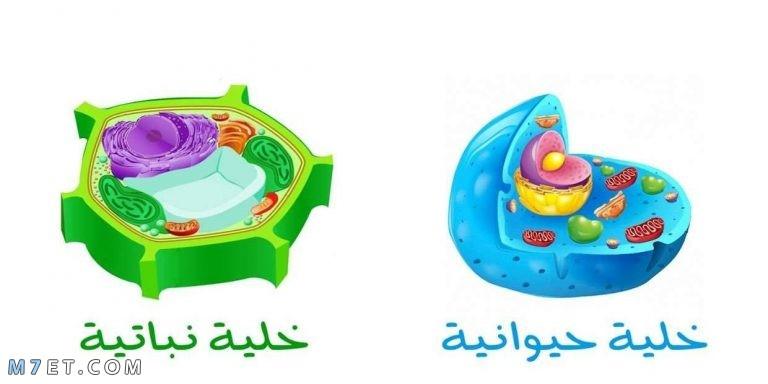 الفرق بين الخلية الحيوانية والخلية النباتية