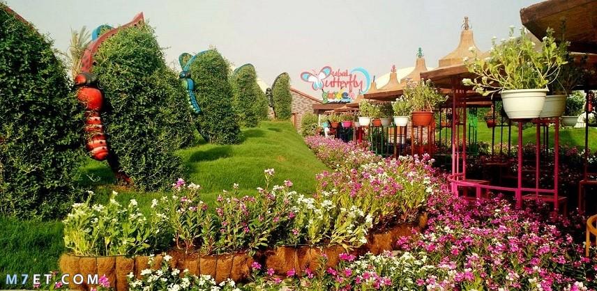 اين تقع حديقة الفراشات في دبي