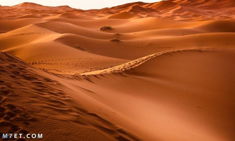 أين تقع صحراء لوط