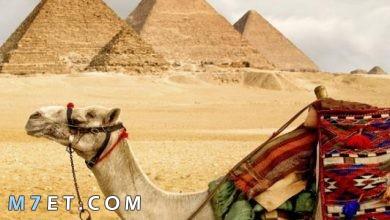 Photo of بحث عن انواع السياحة في مصر