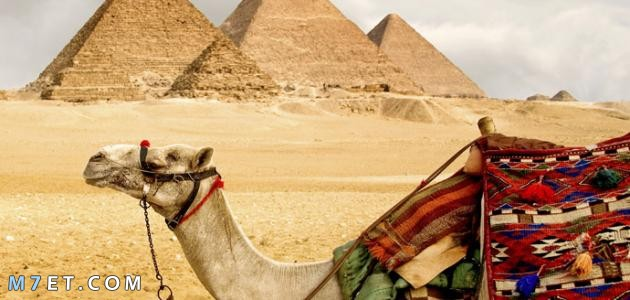بحث عن انواع السياحة في مصر