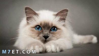 Photo of حكم بيع القطط وسبب تحريم بيع القطط