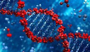 معلومات تفصيلية عن تحليل الجينات الوراثية