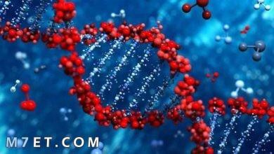 Photo of معلومات تفصيلية عن تحليل الجينات الوراثية