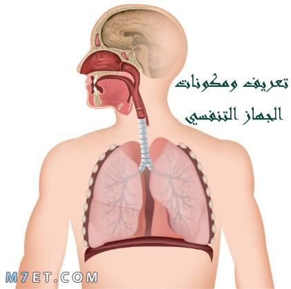 تعريف ومكونات الجهاز التنفسي