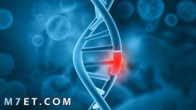 Photo of تحليل الكروموسومات وكيفية إجرائها